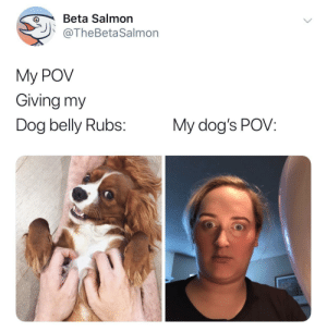Rubs: Beta Salmon  @TheBetaSalmon  My POV  Giving my  Dog belly Rubs:  My dog's POV: