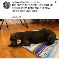 Memes, Puppy, and Hell: beth phelan @beth_phelan  THE PHOTO MY SISTER JUST SENT ME  OF HER GREAT DANE AND THE NEW  PUPPY THEY JUST GOT.  LOOK AT IT Y the hELL havent u followed @kalesaladanimals yet