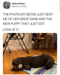 Big and small dog BFFs make the world go round. Tw: beth_phelan Pups @lucy_and_hulk: beth phelan  @beth_phelan  THE PHOTO MY SISTER JUST SENT  ME OF HER GREAT DANE AND THE  NEW PUPPY THEY JUST GOT.  LOOK AT IT. Big and small dog BFFs make the world go round. Tw: beth_phelan Pups @lucy_and_hulk