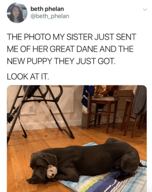 Big and small dog BFFs make the world go round.Tw: beth_phelanPups @lucy_and_hulk: beth phelan  @beth_phelan  THE PHOTO MY SISTER JUST SENT  ME OF HER GREAT DANE AND THE  NEW PUPPY THEY JUST GOT.  LOOK AT IT Big and small dog BFFs make the world go round.Tw: beth_phelanPups @lucy_and_hulk