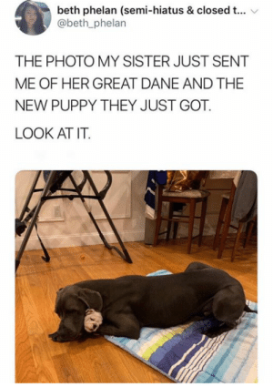 Cute, Puppy, and Got: beth phelan (semi-hiatus & closed t...  @beth_phelan  THE PHOTO MY SISTER JUST SENT  ME OF HER GREAT DANE AND THE  NEW PUPPY THEY JUST GOT  LOOK AT IT So cute.