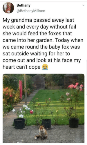 Fail, Family, and Grandma: Bethany  @BethanyMillson  My grandma passed away last  week and every day without fail  she would feed the foxes that  came into her garden. Today when  we came round the baby fox was  sat outside waiting for her to  come out and look at his face my  heart can't cope A grandma as wholesome as this family of foxes
