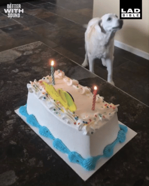 'Roxy got a little bit excited when we sang to her on her birthday this year...' 😂: BETTER  WITH  SOUND  LAD  BIBLE 'Roxy got a little bit excited when we sang to her on her birthday this year...' 😂