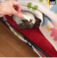 Dank, Bible, and 🤖: BETTER  WITH  SOUND  LAD  BIBLE This is how you wake up an otter 😂😂