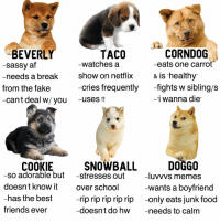 Af, Fake, and Food: BEVERLY  CORNDOG  TACO  watches a  eats one carrot  -sassy af  needs a break  show on netflix  is healthy  cries frequently  -fights w sibling/s  from the fake  can't deal w/ you  -uses  i wanna die  COOKIE  SNOWBALL  DOGGO  -so adorable but  stresses out  Iuvvvs memes  doesn't know it  over school  -wants a boyfriend  -has the best  -rip rip rip rip rip  only eats junk food  friends ever  -doesn't do hw needs to calm lol this one sucks sorry :-- tagyourself