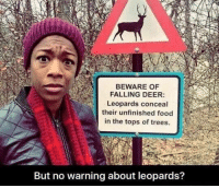 Deer, Food, and Trees: BEWARE OF  FALLING DEER  Leopards conceal  their unfinished food  in the tops of trees  But no warning about leopards? But the leopards?