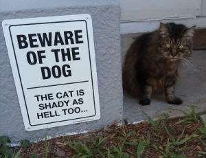 My aunt has a great sense of humor: BEWARE  OF THE  DOG  THE CAT IS  SHADY AS  HELL TOO... My aunt has a great sense of humor