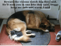 Beware the vicious watch dog they said.  He'll nom you in one bite they said. Doggy  keep me safe and warm I said  facebook.com  That  YouGo