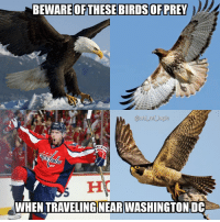 Logic, Memes, and National Hockey League (NHL): BEWAREOR  nhl ref logic  WHEN TRAVELING NEAR WASHINGTONDC Kuznetsov has 30 points in the playoffs, makes for an easy Conn Smythe winner if the Caps close Vegas out tomorrow