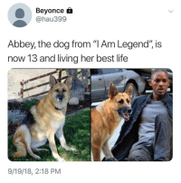 "Beyonce, Cute, and Life: Beyonce  @hau399  Abbey, the dog from ""I Am Legend"", is  now 13 and living her best life  9/19/18, 2:18 PM Follow my other account @x__social_butterfly_x for more cute pics 😍"