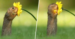 beyoncescock:   A Photographer Captured The Exact Moment a Squirrel Stopped to Smell a Daisy (x): beyoncescock:   A Photographer Captured The Exact Moment a Squirrel Stopped to Smell a Daisy (x)