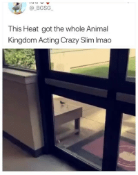 Crazy, Memes, and Animal: @_BGSG  This Heat got the whole Animal  Kingdom Acting Crazy Slim Imao Absolutely wild 😂 (contact us at partner@memes.com for credit-removal)