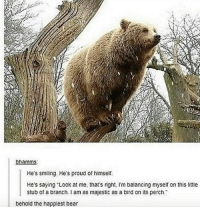 "Offed Himself: bhamms:  He's smiling. He's proud of himself.  He's saying ""Look at me, that's right. Im balancing myself on this little  stub of a branch. I am as majestic as a bird on its perch.  behold the happiest bear"