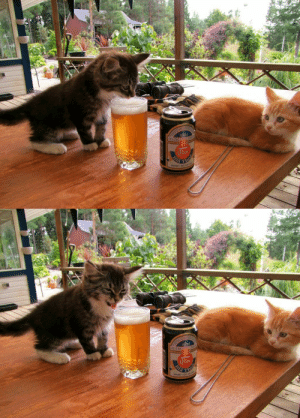 Beer, Cats, and Love: BIERE  DE LUXE  hor arbitrary-stag: Me everytime I try beer thinking this time I might like it.  cats are all gay hence why they hate beer cus beer is heterosexual cuture; i love science
