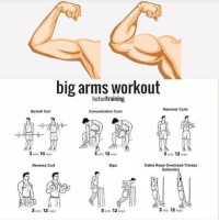 RT @FactofWorkout: Big arms workout... https://t.co/96ojKFWnnB: big arms workout  factsoftraining  Hammer Curls  Barbell Curl  Concentration Curis  3 sets 10 reps  3 sets 12 reps  3 sets 12 reps  Reverse Curl  Dips  Cable Rope Overhead Triceps  Extension  3 sets 12 reps  3 sets 12 reps  3 sets 12 reps RT @FactofWorkout: Big arms workout... https://t.co/96ojKFWnnB