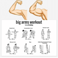Best big arms Workout 💪 . Follow @rawfitness247 for more..: big arms workout  Hammer Curls  Barbell Curl  Concentration Curls  3 sets 10  reps  3 sets 12  reps  3 sets 12  reps  Cable Rope Overhead Triceps  Reverse Curl  Dips  Extension  3 sets 12  reps  3 sets 12  reps  3 sets 12  reps Best big arms Workout 💪 . Follow @rawfitness247 for more..