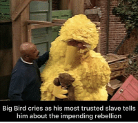 Big Bird, Rebellion, and Big: Big Bird cries as his most trusted slave tells  him about the impending rebellion