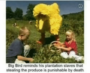 are big bird memes still a thing via /r/memes https://ift.tt/2FMTwTe: Big Bird reminds his plantation slaves that  stealing the produce is punishable by death are big bird memes still a thing via /r/memes https://ift.tt/2FMTwTe