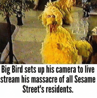 Morning: Big Bird sets up his camera to live  stream his massacre of all Sesame  Street's residents. Morning