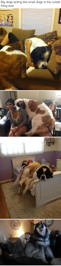 """9gag, Animals, and Dogs: Big dogs acting like small dogs is the cutest  thing ever   VIA 9GAG.COM <p><a href=""""http://babyanimalgifs.tumblr.com/"""" target=""""_blank"""">baby <b>animals</b> blog</a></p>"""