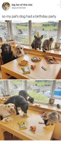 Birthday, Food, and Lol: big fan of this site  @granitetide  so my pal's dog had a birthday party nishiroma: lynati:  darkmagepoppers:  weavemama:  THIS REALLY MADE MY DAY  lol the yellow lab  And the bearded dragon chillin' with his own food.  look at him hes so excited