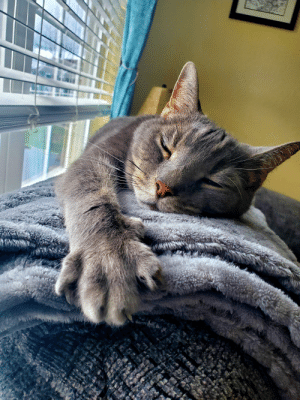 Big kitty paws are the best: Big kitty paws are the best