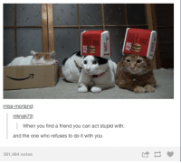 Stupidity: BIG  miss-morland:  niknak79  When you find a friend you can act stupid with:  and the one who refuses to do it with you  361,484 notes