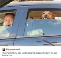 Memes, Seal, and Husband: big-nose-seal  The moment my dog (and husband) realized I was in the car  beside him https://t.co/Of157HWKqr