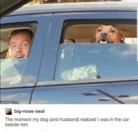 Crying, Seal, and Husband: big-nose-seal  The moment my dog (and husband) realized I was in the car  beside him *cheerfully crying* via /r/wholesomememes https://ift.tt/2MI6JuE