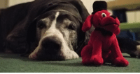 Boy, Red, and Big: Big sleepy boy with his red friend