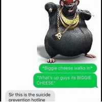 "*Biggie cheese walks in  ""What's up guys its BIGGIE  CHEESE""  Sir this is the suicide  prevention hotline dankmemes memes dank feminist cancer trump deadpool southpark spongbob doggo normie meme tumblr fnaf kidzbop lol lmao lmfao doritopancakes doritos instacomedy filthyfrank kek 4chan furry edgy wtf tagsforlikes cringe"
