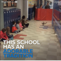 Memes, Duck, and Ducks: BilLDriscoll Jr.  THIS SCHOOL  HAS AN  ADORABLE A parade for ducks? Count me in! #diplyvideo