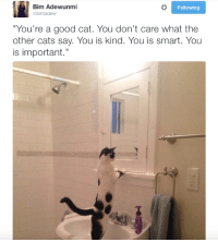 """Cats, Memes, and Good: Bim Adewunmi  @bimadew  Following  """"You're a good cat. You don't care what the  other cats say. You is kind. You is smart. You  is important."""" Cats are everything."""