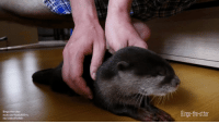 Saw this and thought it would be suitable here! Otters are crazy adorable!: Bingo-the-otter  youtu.be/-fixabJBGYc  via /u/aloofloofah  Bingo-the-otter Saw this and thought it would be suitable here! Otters are crazy adorable!