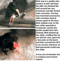 Climbing, Memes, and Vicious: Binti Jua is a gorilla who  saved a 3 year old boys  life after he climbed the  wall around her zoo  enclosure and fell 18 feet  onto concrete. The boy  was knocked unconsciou  with a broken hand &  vicious gash to his face.  Binti walked over to the  boy while spectators  screamed, certain the  gorilla would harm him.  Instead, Binti picked up  the child, cradling him as  she did her own, gave hin  a few pats on the back  and then carried him 59 f  to an access entrance so  that personnel could save  the child.  A true act of heroism fro  a creature you'd never  expect. https://t.co/0xzUbWAhLi