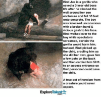 Life, Memes, and True: Binti Jua is a gorilla who  saved a 3 year old boys  life after he climbed the  wall around her zoo  enclosure and fell 18 feet  onto concrete. The boy  was knocked unconscious  with a broken hand &  vicious gash to his face.  Binti walked over to the  boy while spectators  screamed, certain the  gorilla would harm him.  Instead, Binti picked up  the child, cradling him as  she did her own, gave him  a few pats on the back  and then carried him 59 ft  to an access entrance so  that personnel could save  the child.  A true act of heroism from  a creature you'd never  expect.  ExploreTalent☆  .com