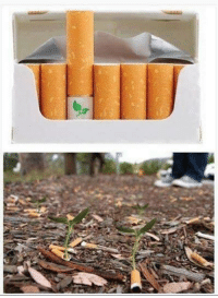 Biodegradable cigarette filters with flower seeds. Save the Planet, Kill Yourself   The Ultimate Facts: Biodegradable cigarette filters with flower seeds. Save the Planet, Kill Yourself   The Ultimate Facts