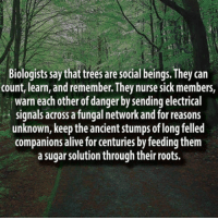 "Alive, Club, and Tumblr: Biologists say that trees are social beings. They can  count, learn, and remember. They nurse sick members,  warn each other of danger by sending electrical  signals across a fungal network and for reasons  unknown, keep the ancient stumps of long felled  companions alive for centuries by feeding them  a sugar solution through their roots. <p><a href=""http://laughoutloud-club.tumblr.com/post/166109475673/very-cool"" class=""tumblr_blog"">laughoutloud-club</a>:</p>  <blockquote><p>Very cool.</p></blockquote>"
