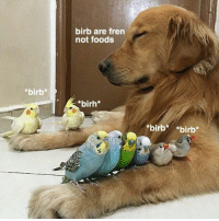birb: *birb*  birb are fren  not foods  birh*  birb*  birb