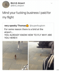 Fucking, Memes, and Business: Bird @ Airport  @Bird_Airport  Mind your fucking business I paid for  my flight  very spooky Thomas山@superbugtom  For some reason there is a bird at the  airport...  YOU ALREADY KNOW HOW TO FLY WHY ARE  YOU HERE!!! 🐥