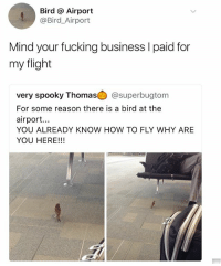 Fucking, Memes, and Business: Bird @ Airport  @Bird_Airport  Mind your fucking business l paid for  my flight  very spooky Thomas @superbugtom  For some reason there is a bird at the  airport...  YOU ALREADY KNOW HOW TO FLY WHY ARE  YOU HERE!!! @savagememesss is a must follow for hilarious memes 😂