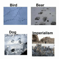 Bird  Dog  Bear  Imperialism They had to destroy everything to save it.