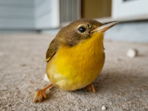 Bird flew into the sliding glass door of a home I was working on. Say there dazed for a while then flew off.: Bird flew into the sliding glass door of a home I was working on. Say there dazed for a while then flew off.