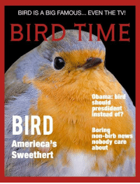 Boringer: BIRD IS A BIG FAMOUS... EVEN THE TV!  BIRD TIME  Obama: bird  should  resdident  instead of?  BIRD  Boring  non-birb news  nobody care  about  Amerieca's  Sweethert