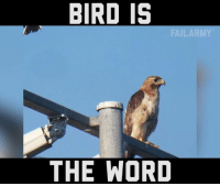 Memes, 🤖, and The Words: BIRD IS  FAILARM  THE WORD Chirp chirp b*#$*%!