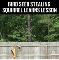 Dank, Guess, and Squirrel: BIRD SEED STEALING  SQUIRREL LEARNS LESSON I guess that'll teach it! 😱😱