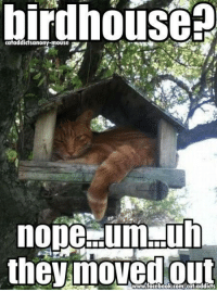 Likely story  http://imgur.com/r/aww/pRcrL: birdhouse  nope dumpuh  the moved www.facebook.com/cat addicts Likely story  http://imgur.com/r/aww/pRcrL