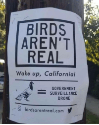 Drone, Memes, and Birds: BIRDS  AREN'T  REAL  Wake up, California!  GOVERNMENT  -SURVEILLANCE  DRONE  0 birdsarentreal.com Wake up