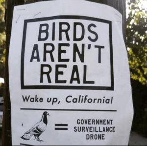 It's true: BIRDS  AREN'T  REAL  Wake up, California!  GOVERNMENT  SURVEILLANCE  DRONE It's true