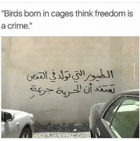 """Down with these cages ✊🏾 Repost @nadia_dahling ・・・ 🕊🕊🕊: """"Birds born in cages think freedom is  a crime  I1 Down with these cages ✊🏾 Repost @nadia_dahling ・・・ 🕊🕊🕊"""